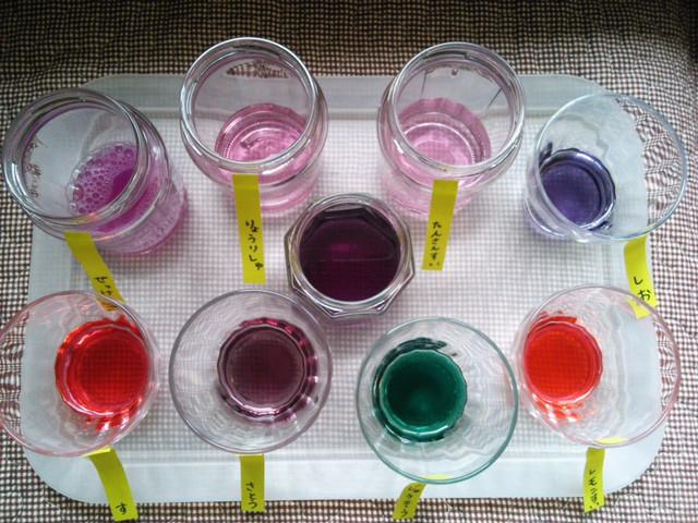 紫キャベツの自由研究